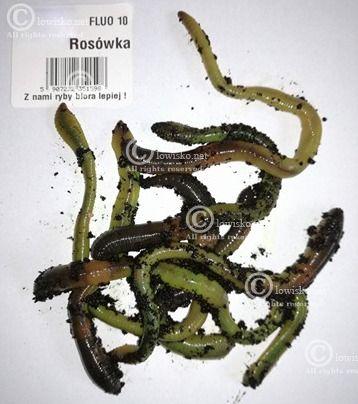 http://lowisko.net/files/rosowka-rosowka-fluo[1].jpg